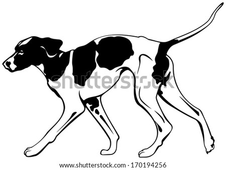 foxhound dog breed vector