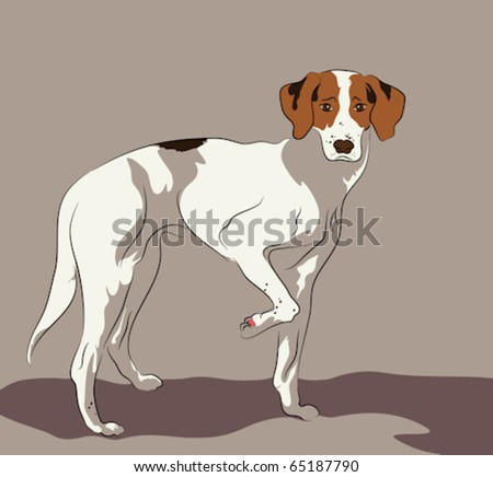 foxhound standing pose