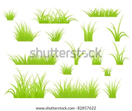 fragment of a green grass
