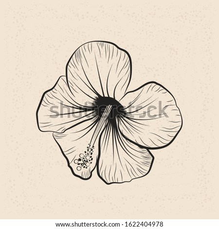 Fragrance Outline Flower. Mallow Chinese Rose. Isolated Botany Plant with Petals. Tropical Karkade or Bissap Herbal Tea, Crimson Blossom. Vector hand drawn style