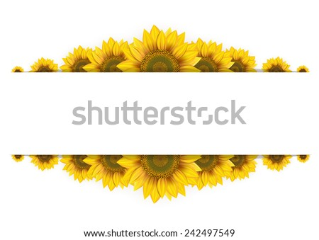 frame of sunflowers on a white