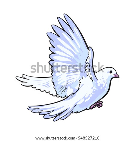 free flying white dove  sketch