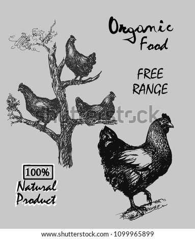 free-range hens. hen living in tree, products from chicken meat and eggs ,illustration hen. hand drawn chicken