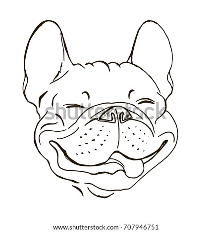 french bulldog  portrait  happy