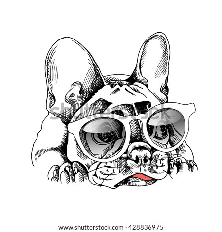french bulldog portrait in a
