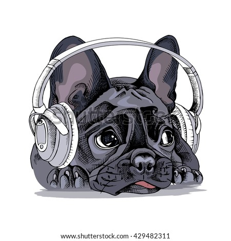 french bulldog portrait with a