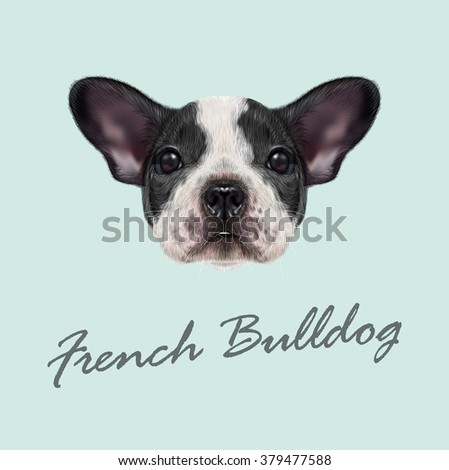 french bulldog puppy vector