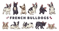 French bulldogs. Vector bulldog set. Funny cartoon puppy isolated on white background