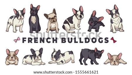 french bulldogs vector bulldog