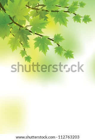 fresh and green leaves vector
