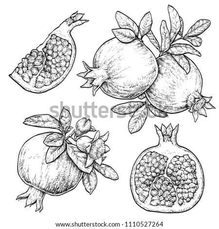 Fresh and juicy pomegranate. hand drawn illustration isolated on white background. Doodle healthy food illustrations