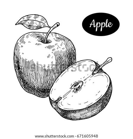 fresh apple hand drawn sketch