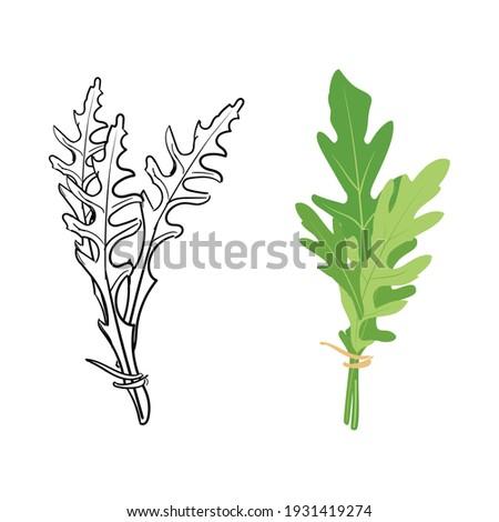 Fresh arugula leaves hand drawn sketch isolated on white background. Rocket salad or arugula. Vector ストックフォト ©
