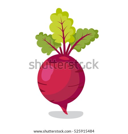 Fresh beet with leaf. Vector illustration. Isolated white background. Natural Root. Vegetable Ingredient for food