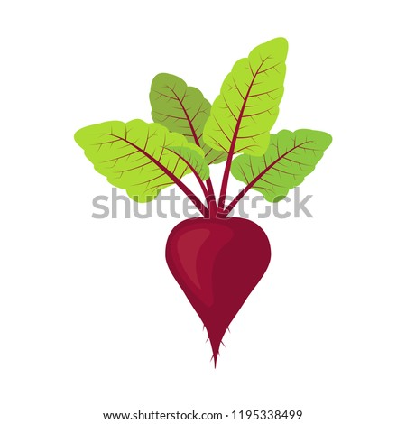 Fresh beet with leaf. vegetarianism. Vector illustration, isolated on white background