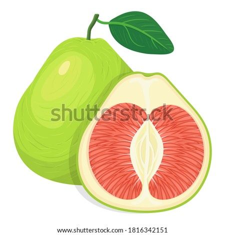 Fresh bright exotic whole and cut slice pomelo fruit isolated on white background. Summer fruits for healthy lifestyle. Organic fruit. Cartoon style. Vector illustration for any design. Foto stock ©