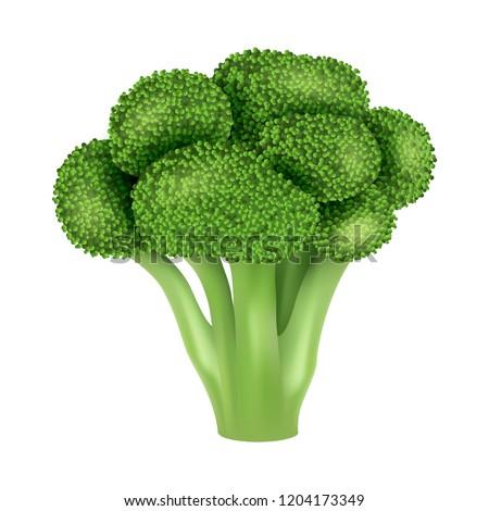 Fresh broccoli icon. Realistic illustration of fresh broccoli vector icon for web design