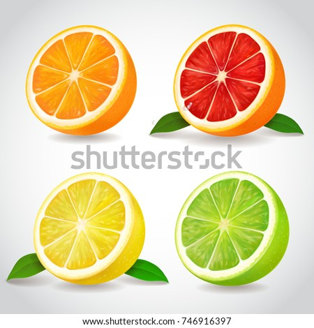 Fresh citrus fruit halves. Orange grapefruit lemon lime isolated vector realistic icons