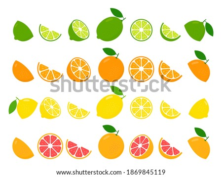 Fresh citrus fruits whole and halves of lime, lemon, grapefruit and orange set. Large fruit collection vector illustration isolated on white background. Healthy food concept.