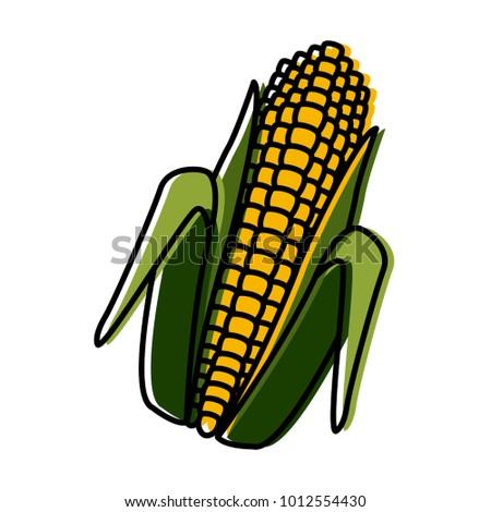 Fresh corn isolated