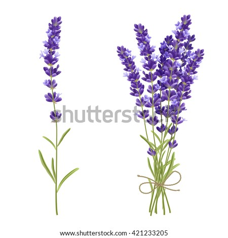 fresh cut fragrant lavender