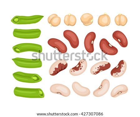 Fresh cut vegetables isolated on white background. Red beans, white beans, french beans and chickpea elements. Vector beans collection.