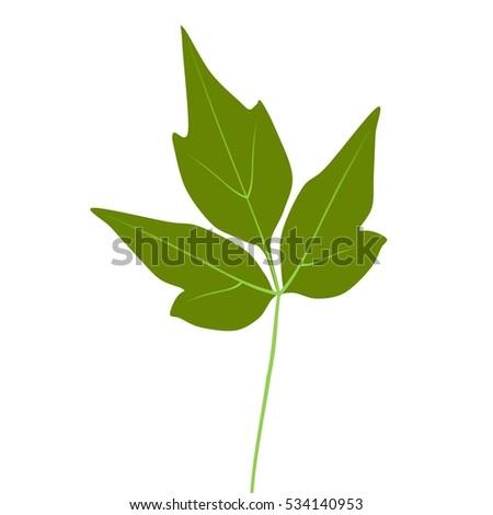 fresh green Eastern Poison Ivy leaf