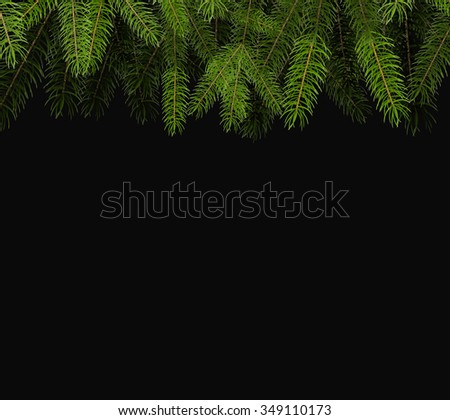 fresh green fir branch close up
