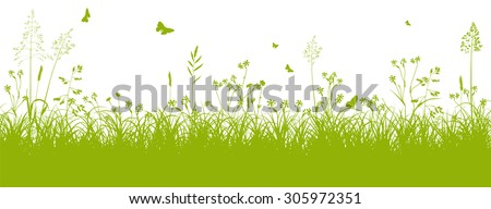 fresh green grass landscape