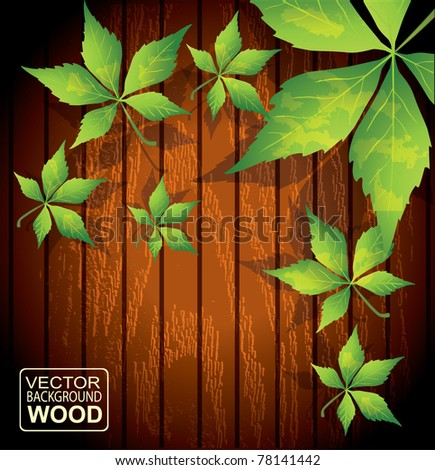 Fresh green leaves against wooden background