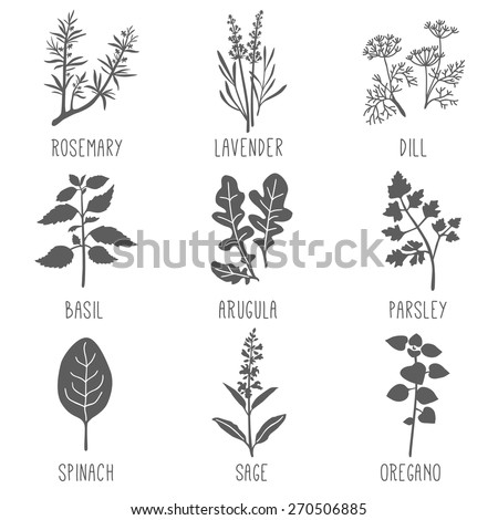 fresh herbs and spices icon set