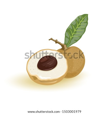 Fresh longan or dragon eye. Sweet, juicy and succulent fruit with leaf. Exotic tropical plant of Southern Asia. Cartoon vector illustration isolated on white for menu, cookbook, recipe, packing.
