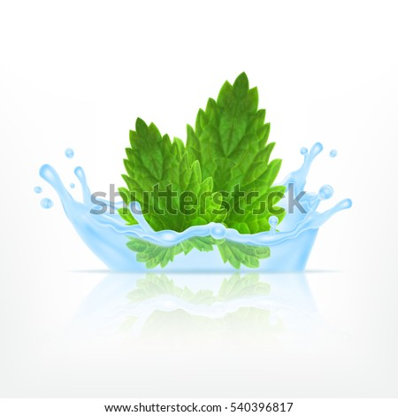 fresh mint in water splash