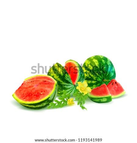 Fresh, nutritious and tasty watermelon. Symbols of berries. Elements for label design. Vector illustration. Berries ingredients in triangulation technique. Watermelon low poly.