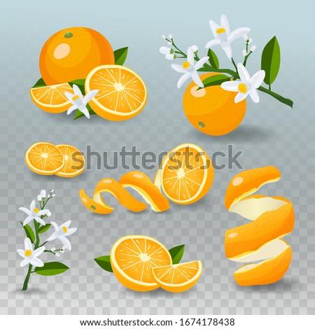 Fresh orange fruit set. Juicy oranges isolated on checked background. Realistic vector set of citrus fruits: whole orange, sliced orange, peel, orange flowers.