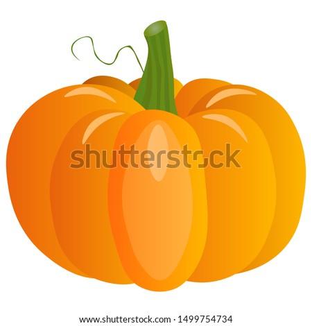 Fresh pumpkin on a white background. Harvesting for the winter. Autumn harvest. Vector illustration