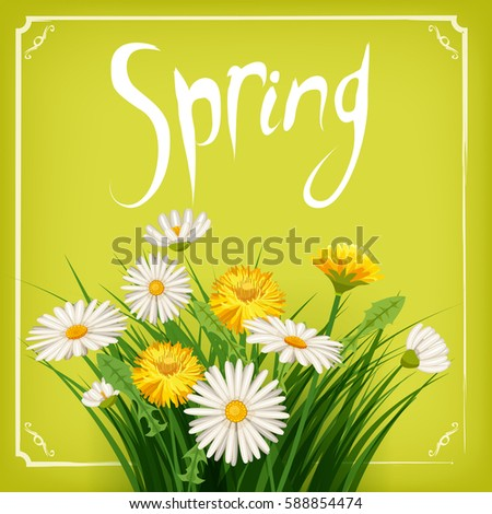 Fresh spring, daisies and dandelions, grass, greeting, isolated, Cartoon style, vector illustration