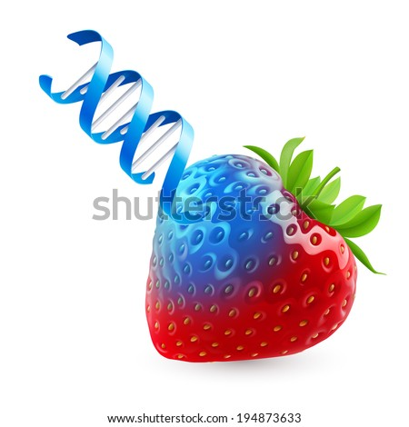fresh strawberry undergoing gmo