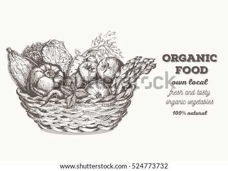 Fresh vegetables in basket. Natural food for farmers market. Hand drawn vector illustration.