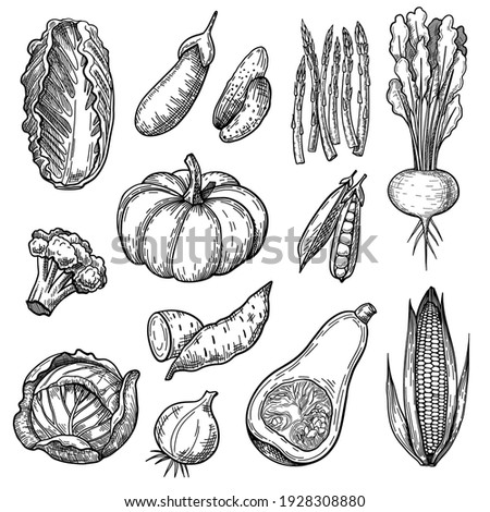 Fresh vegetables sketches set. Hand drawn pumpkin, salad, broccoli, onion, eggplant, cabbage, corn, lettuce, radish. Engraved vector illustration for vegan food, gardening, harvest concept