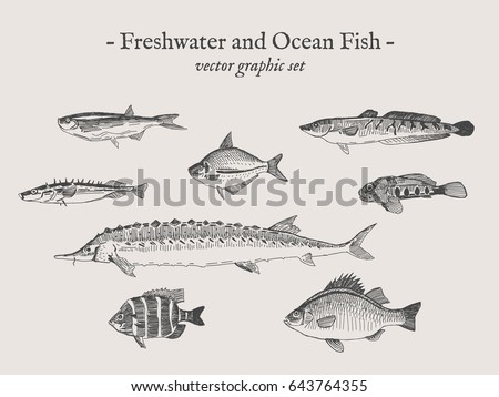 freshwater and ocean fish
