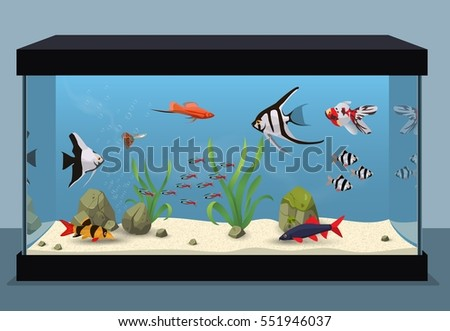 Shutterstock Freshwater aquarium illustration containing different kinds of fishes