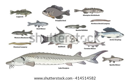 freshwater fish illustrations