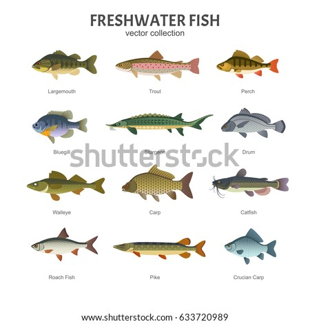 freshwater fish set vector