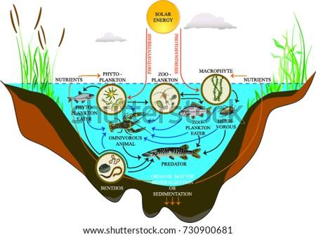 Shutterstock Freshwater lake ecosystem