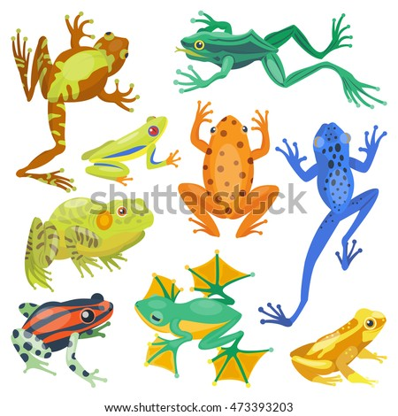 frog cartoon tropical animal