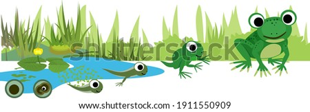 Frog life cycle. Sequence of stages of development of frog from egg to adult animal against the pond
