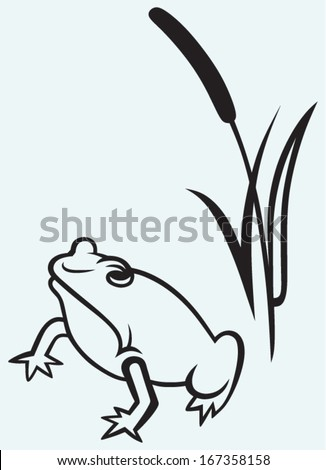 Frog near reed isolated on blue background