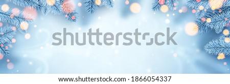 frozen white spruce branches