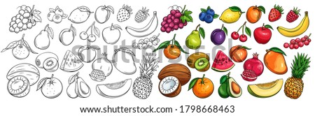 Fruit and berries drawn icons vector set. Illustration of colored and monochrome fruits for design farm product, market label vegetarian shop.